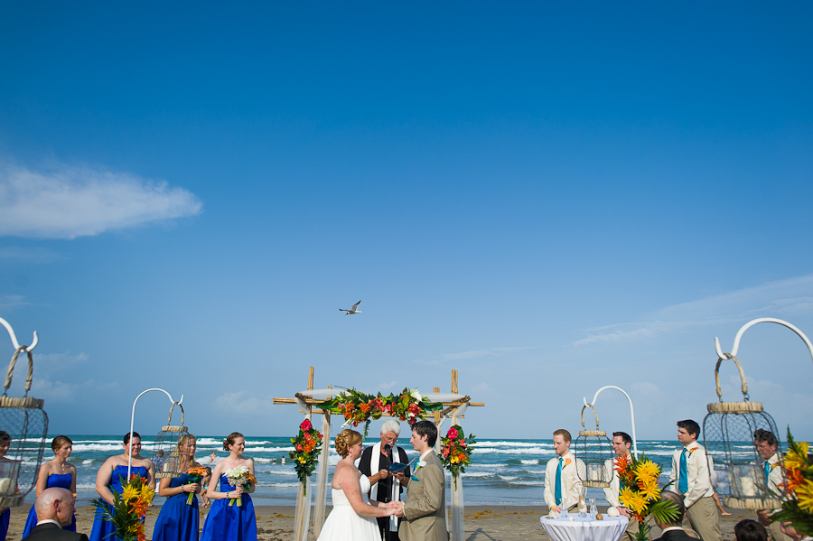 Seagull At Beach Wedding