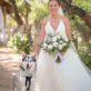 Bride and Dog in Bow Tie